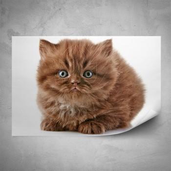 Plakát - Hnědé kotě