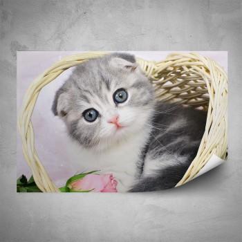 Plakát - Kotě v košíku
