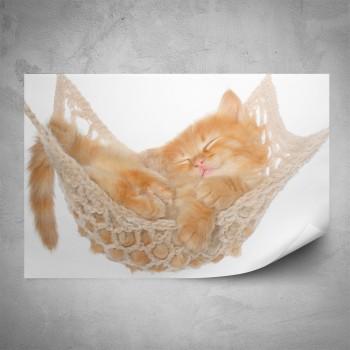 Plakát - Kotě v houpací síti