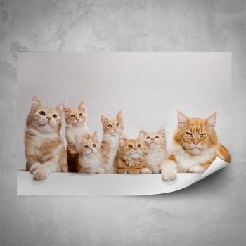 Plakát - Zrzavá koťata