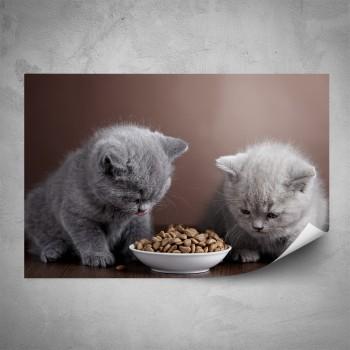 Plakát - Šedá koťata