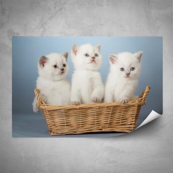 Plakát - Bílá koťata
