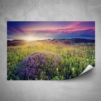 Plakát - Fialové květy na louce