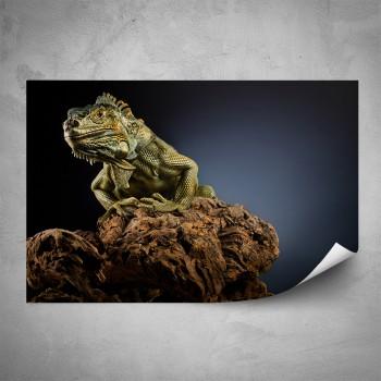 Plakát - Leguán na kameni