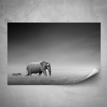 Plakát - Slon a zebra