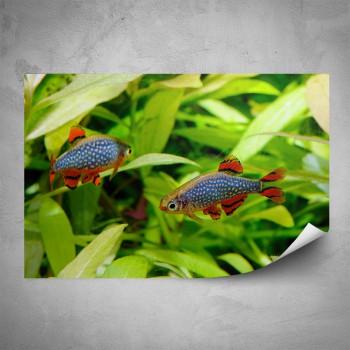 Plakát - Rybky v akváriu