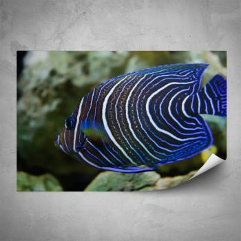 Plakát - Modrá rybka