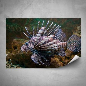 Plakát - Mořská ryba