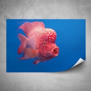 Plakát - Růžová rybka
