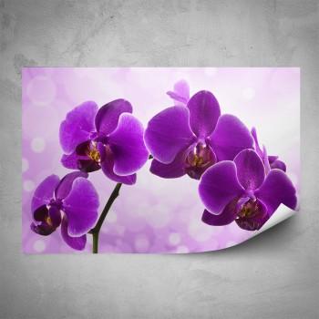 Plakát - Fialová orchidej