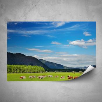 Plakát - Stádo krav