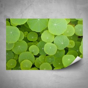Plakát - Zelené listy makro