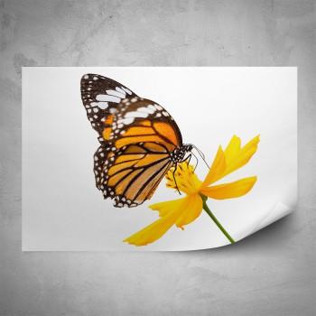 Plakát - Motýl na žlutém květu