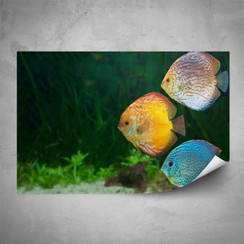 Plakát - Barevné rybky