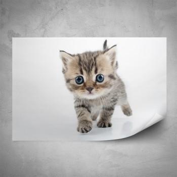 Plakát - Malé kotě