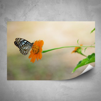 Plakát - Motýl na květince