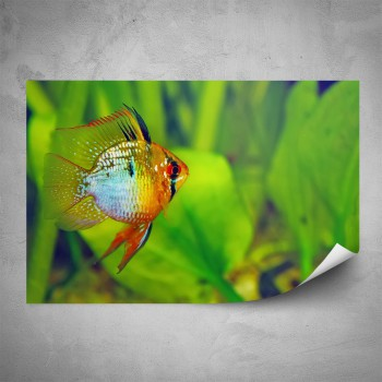 Plakát - Akvarijní rybička