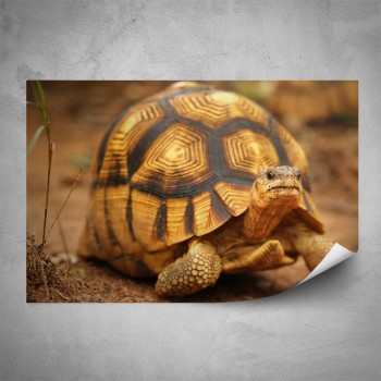 Plakát - Želva