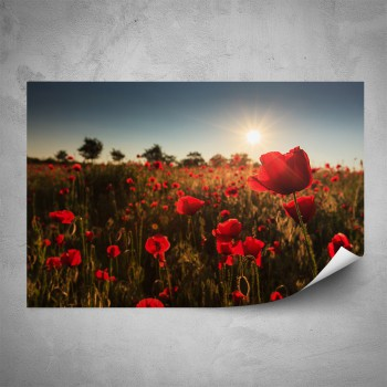 Plakát - Červené vlčí máky