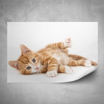 Plakát - Kotě