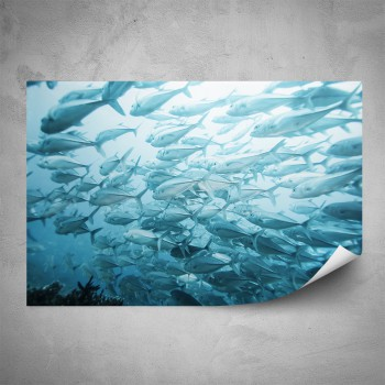 Plakát - Hejno ryb