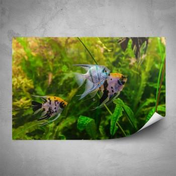 Plakát - Život v akváriu