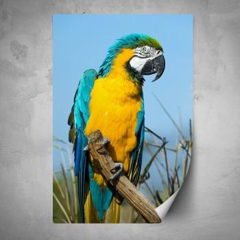 Plakát - Žluto modrý papoušek