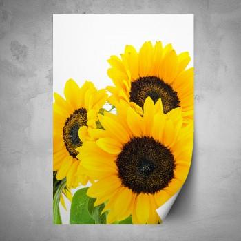 Plakát - Slunečnice na bílém podkladu