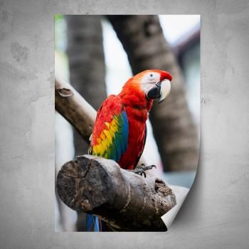 Plakát - Barevný papoušek