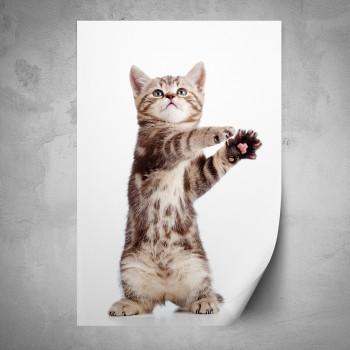 Plakát - Stojící kotě