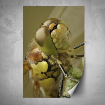 Plakát - Detail vážky