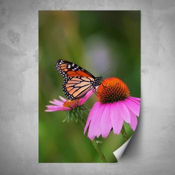 Plakát - Červený motýl na květu