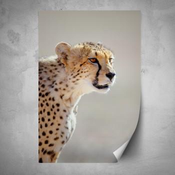 Plakát - Gepard