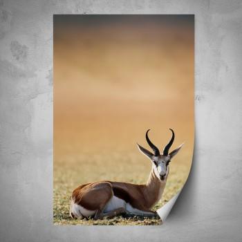 Plakát - Antilopa