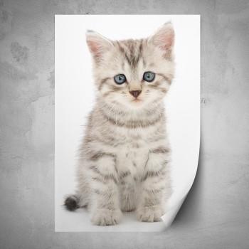 Plakát - Sedící kotě