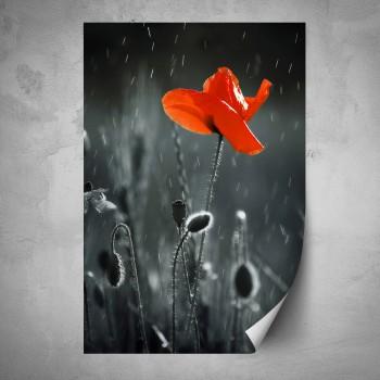 Plakát - Červený mák