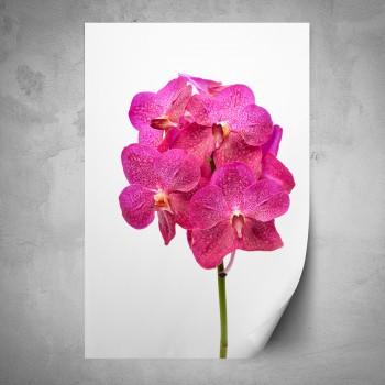 Plakát - Růžový květ