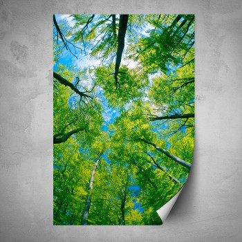 Plakát - Zelené koruny stromů
