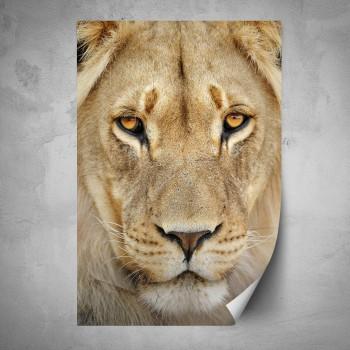 Plakát - Tvář lva