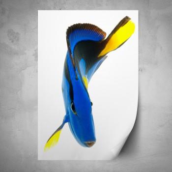 Plakát - Modrá ryba
