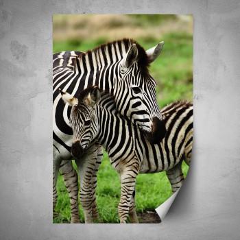 Plakát - Zebry