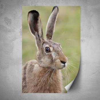 Plakát - Zajíc