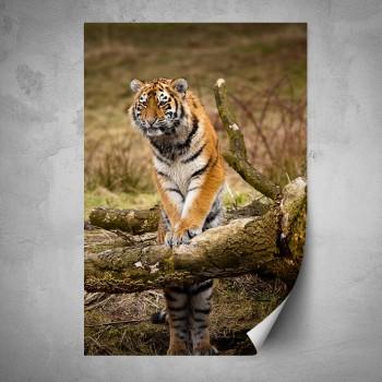 Plakát - Tygr