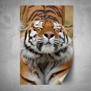 Plakát - Tygr z blízka