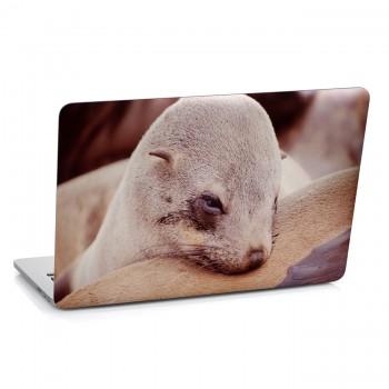 Samolepka na notebook - Mládě tuleně