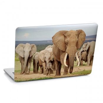 Samolepka na notebook - Stádo slonů