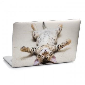 Samolepka na notebook - Kotě na zádech