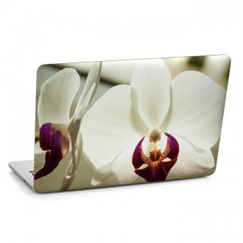 Samolepka na notebook - Bílá orchidej
