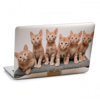Samolepka na notebook - Zrzavá koťata