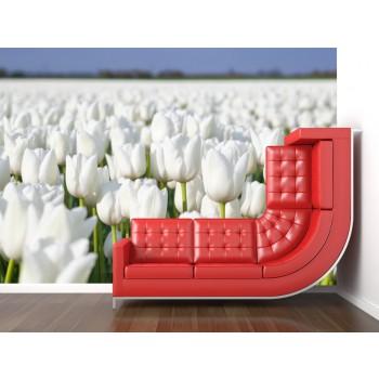 Tapeta - Pole tulipánů